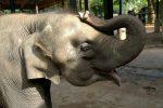 Кое е слончето Ялмар?