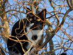 Защо се сърдят котките?