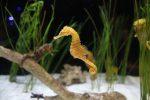 Необикновените морски кончета