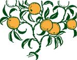 Дървото с най-вкусните плодове
